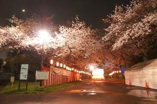 墨田神社 (1).JPG