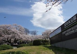 皇居周り散歩 (1).JPG