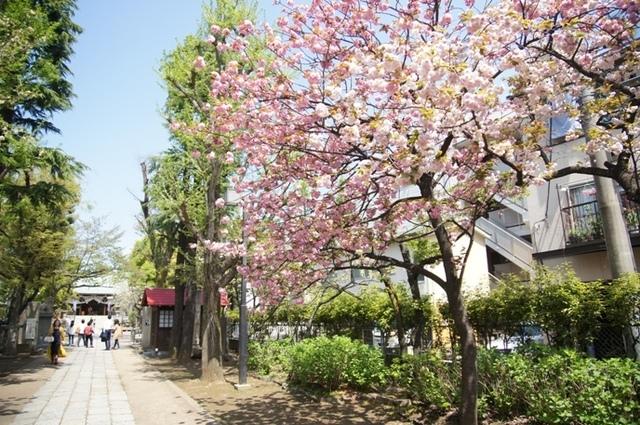 亀戸香取神社 (4).JPG