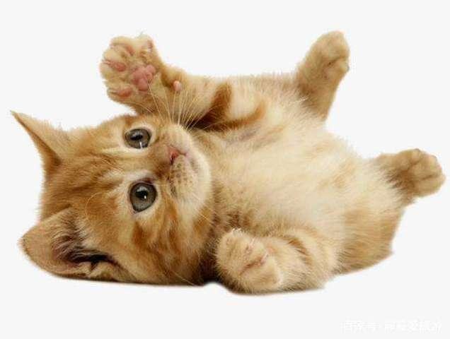 貓皮膚病中的跳蚤過敏性皮炎有哪些類型