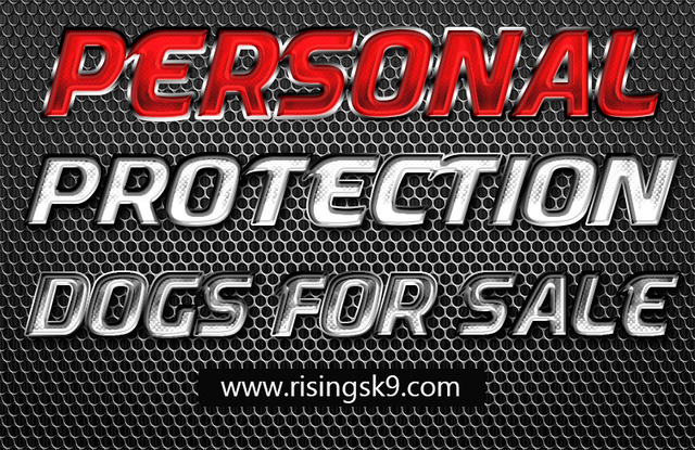 Personal Protection Dogs For Sale.jpg
