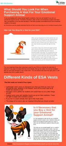 What Should You Look For When Purchasing A Vest For Your Esa.png