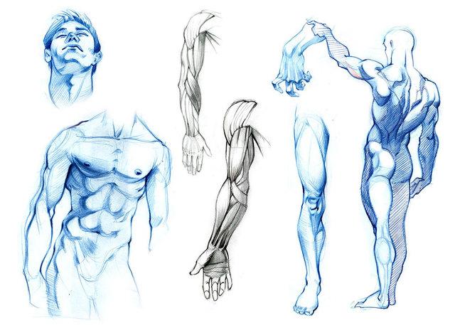 anatomy_studies_by_ZurdoM.jpg